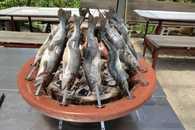 釣った魚を調理して食べる2
